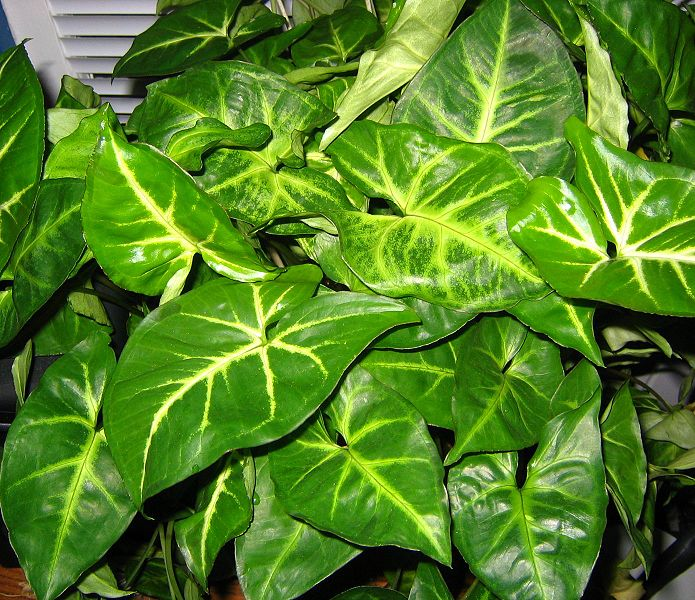 ~ Houseplants for Beginners ~ Lesson One