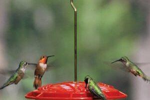 Hummingbirds In YOUR Yard ~