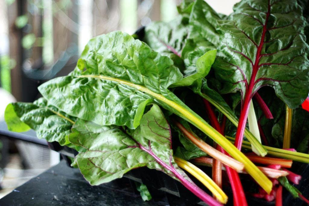 Freezing Greens: Spinach, Collards, Kale, Mustard, Swiss Chard (she: Jennifer)