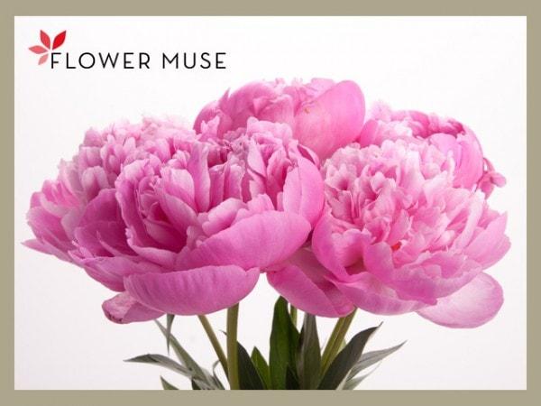 Flowermuse-Peonies-Bouquet