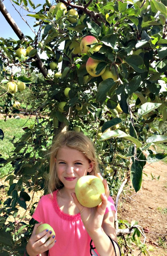 applepicking2web