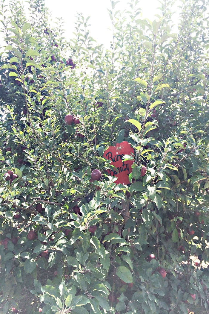appletree2web