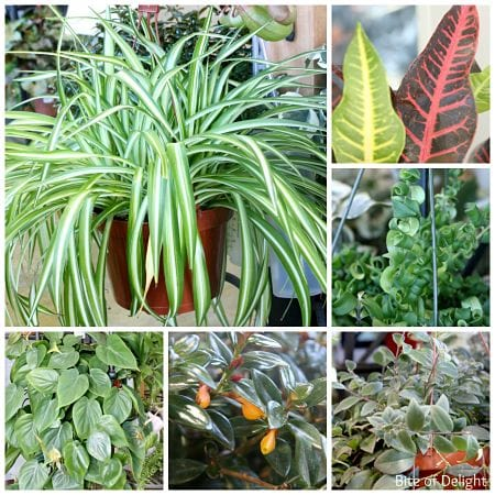 Houseplant Collage_opt