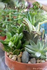 Houseplant care from Western Garden