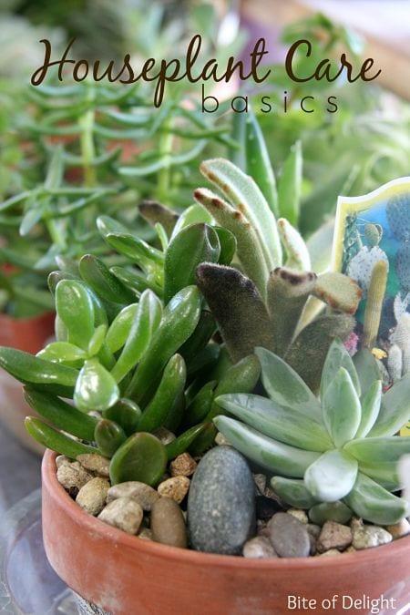 houseplants 11 main_opt