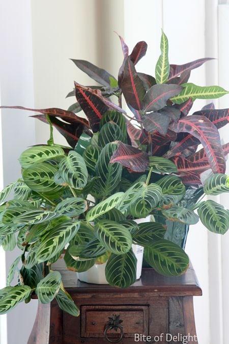 houseplants 4_opt