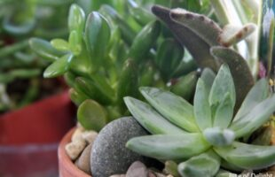 Houseplant Care – And a Giveaway! (she: Becky)