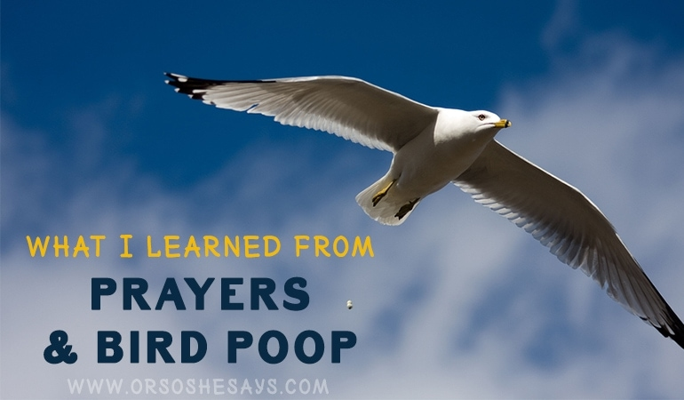 What I Learned from Prayers & Bird Poop (he: Dan)