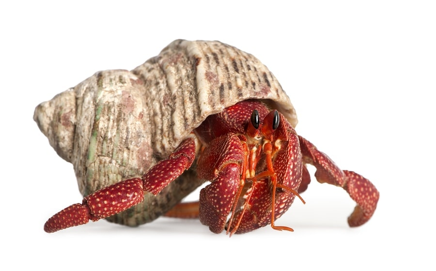 Finding Hope Through a Hermit Crab (he: Dan)