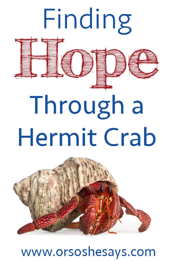 Finding Hope Through a Hermit Crab  www.orsoshesays.com