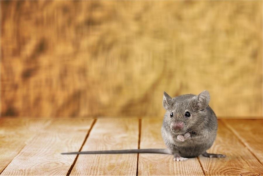 Dan's Man Rant: Of Mouse and Dan