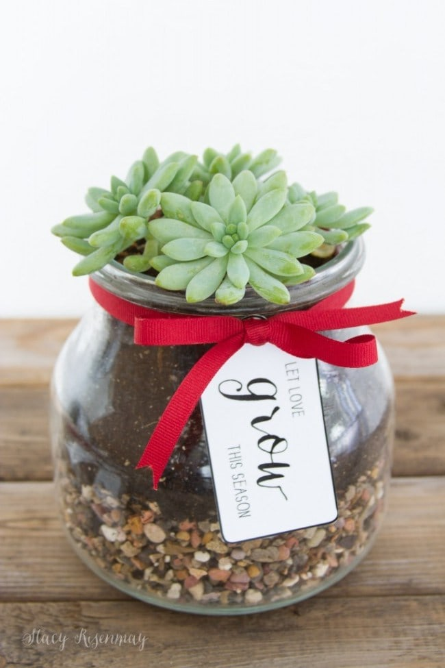 Plant Christmas Gift ~ Gift Idea for Neighbors